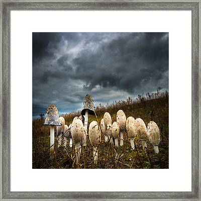 Shaggy Ink Cap Toadstools. Framed Print by Gary Gillette
