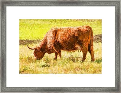 Shaggy Scottish Highlander Framed Print