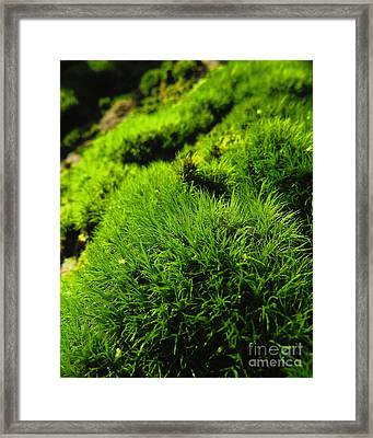 Shaggy Moss Framed Print by Randy Jackson