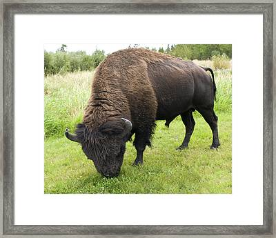 Framed Print featuring the photograph Shaggy by Rhonda McDougall