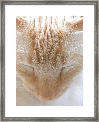 Shai Framed Print