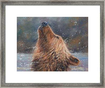 Shake It Framed Print by David Stribbling