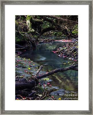 Shakespear Reserve Framed Print by Mike  Ezernieks