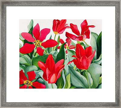Shakespeare Tulips Framed Print by Christopher Ryland