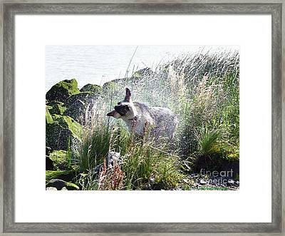 Shaking It Off Framed Print
