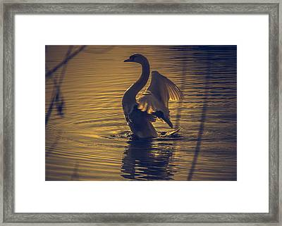 Shaking Off The Excess Framed Print