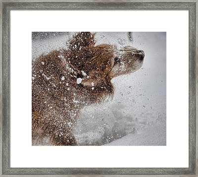 Shaking Off The Snow Framed Print by John Crothers