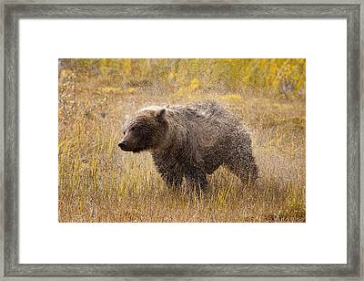 Shaking Off The Water Framed Print by Tim Grams
