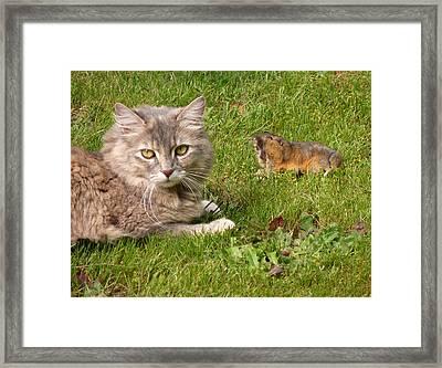 Shall I                              Framed Print by Gracia  Molloy