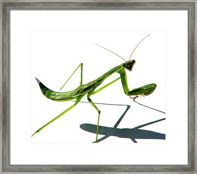 Shall We Dance Framed Print by Angela Davies