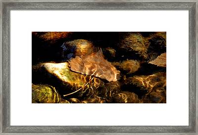 Shallow Beauty Framed Print