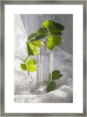 Shamrocks In A Vintage Bottle Framed Print