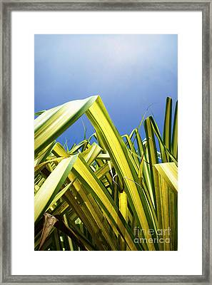Framed Print featuring the photograph Shape Of Hawaii 9 by Ellen Cotton