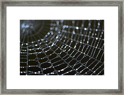 Shaped By The Rains No 2 Framed Print