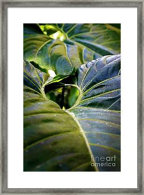 Framed Print featuring the photograph Shapes Of Hawaii 11 by Ellen Cotton