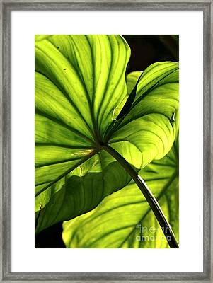 Shapes Of Hawaii 12 Framed Print