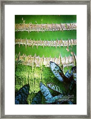 Framed Print featuring the photograph Shapes Of Hawaii 13 by Ellen Cotton
