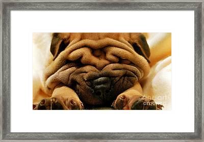 Shar Pei Puppy Framed Print