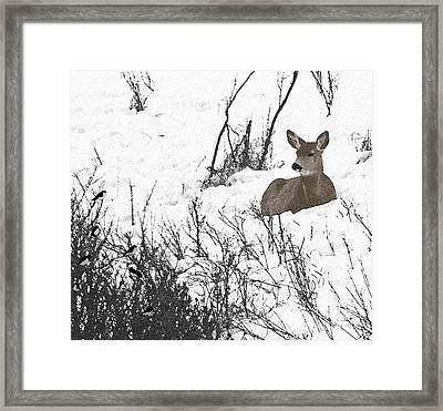Share The Land Framed Print by Al Bourassa