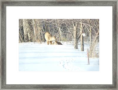 Framed Print featuring the photograph Sharing And Caring by Dacia Doroff