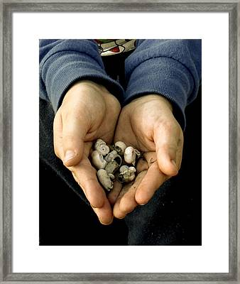 Sharing Hands Framed Print by Paulette Maffucci