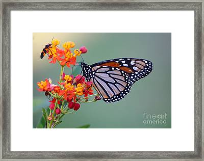 Sharing Framed Print by Marty Fancy