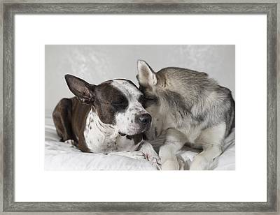 Framed Print featuring the photograph Sharing Secrets  by Brian Cross