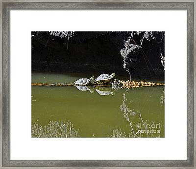 Sharing Sliders Framed Print by Al Powell Photography USA