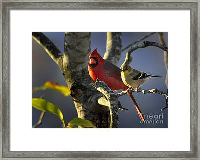 Sharing The Light Framed Print