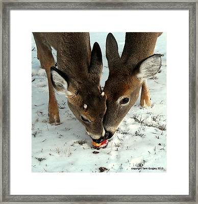 Sharing The Love Framed Print