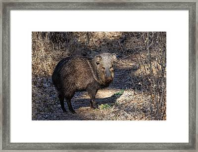 Sharing The Trail Framed Print