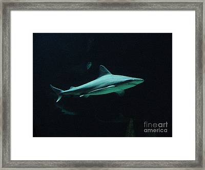 Shark-09451 Framed Print by Gary Gingrich Galleries