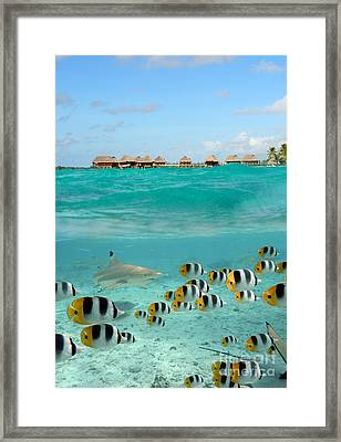 Over-under With Shark And Butterfly Fish At Bora Bora Framed Print