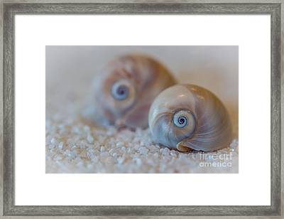 Shark Eye Framed Print