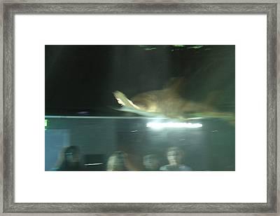 Shark - National Aquarium In Baltimore Md - 121213 Framed Print