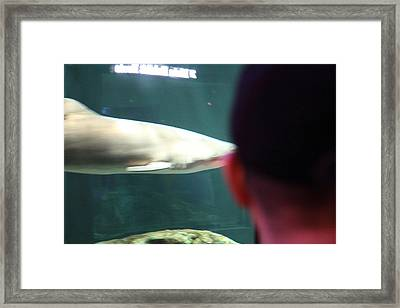 Shark - National Aquarium In Baltimore Md - 12122 Framed Print by DC Photographer