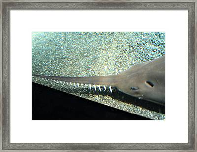 Shark - National Aquarium In Baltimore Md - 121222 Framed Print