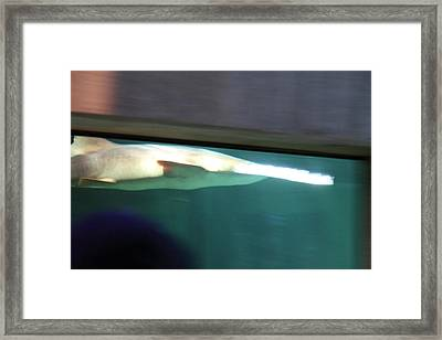 Shark - National Aquarium In Baltimore Md - 12123 Framed Print