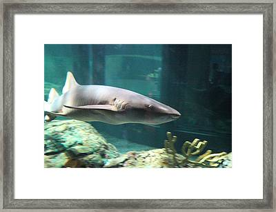 Shark - National Aquarium In Baltimore Md - 12129 Framed Print
