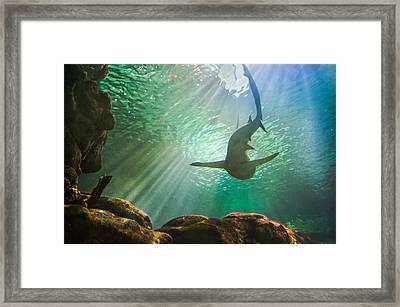 Shark Tank Framed Print by Bill Pevlor