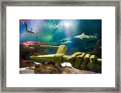 Shark Tank Trident Framed Print by Bill Pevlor