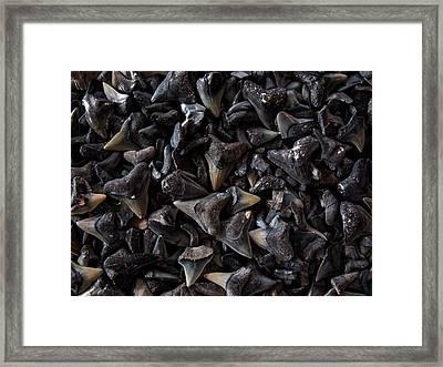 Shark Teeth Framed Print
