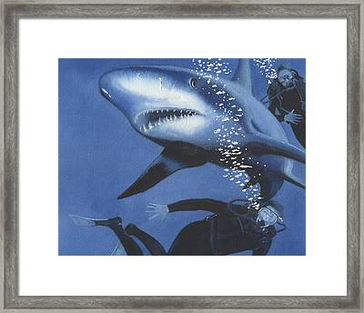 Sharkbait Framed Print by Denny Bond