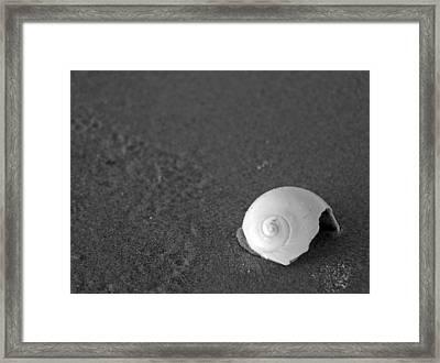 Shark's Eye In The Sand Framed Print