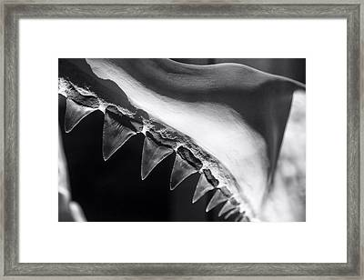 Shark's Teeth Framed Print