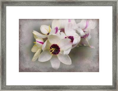 Framed Print featuring the photograph Sharon by Elaine Teague