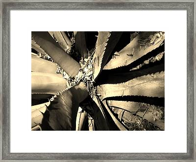 Sharp Edged Self Protection Framed Print by Lori-Anne Fay