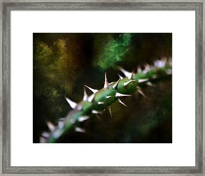 Sharper Focus Framed Print by Deena Stoddard