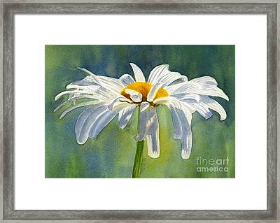 Shasta Daisy Blossom With Blue Background Framed Print by Sharon Freeman