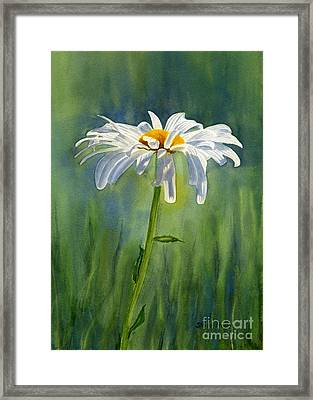 Shasta Daisy Flower With Blue Green Background Framed Print by Sharon Freeman